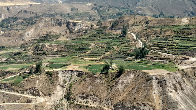 agriculture adds colors to the Colca Canyon