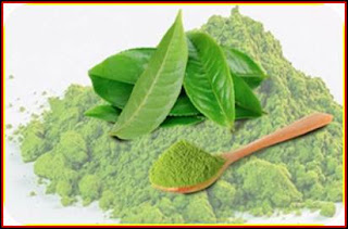 what is matcha green tea ?? And what are the benefits to organifi green juice powder ??