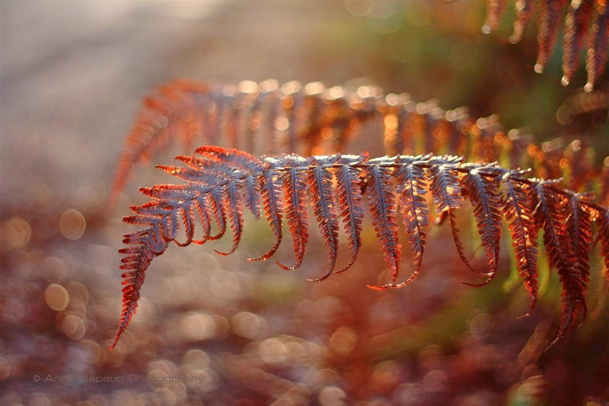 ferns by the road in beautiful light
