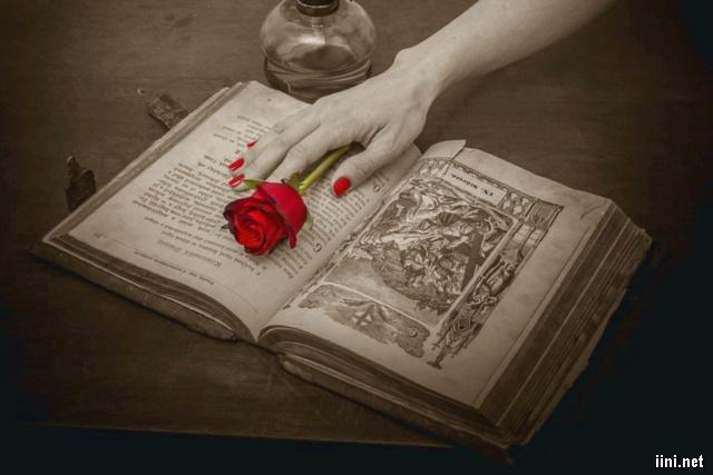 ảnh hồng và sách xưa