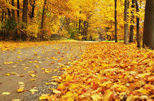 اجمل خلفيات عن الخريف