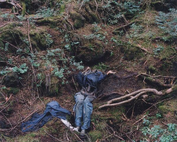 Hutan Aokigahara hutan paling angker dimana tempat orang bunuh diri