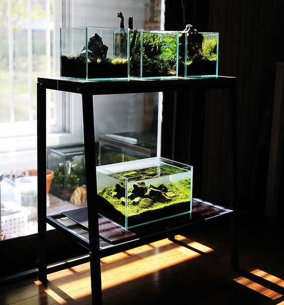 Aquascape Mini di Rumah