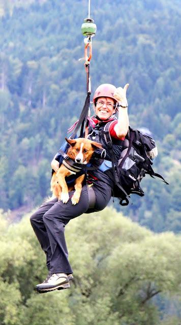 Austrian Pinscher Dojan as a mountain rescue dog