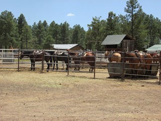 arizona horseback riding