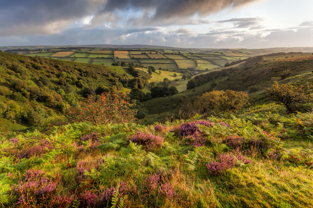 Foreground heather and patchwork fields at the Punchbowl from Winsford hill in Exmoor