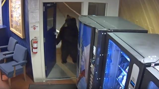 ΔΕΝ ΥΠΑΡΧΕΙ:Αρκούδα άνοιξε την… πόρτα και μπήκε σε αστυνομικο τμήμα – ΒΙΝΤΕΟ