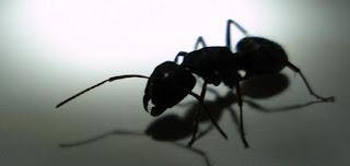شركة مكافحة النمل بالاسود بالدمام