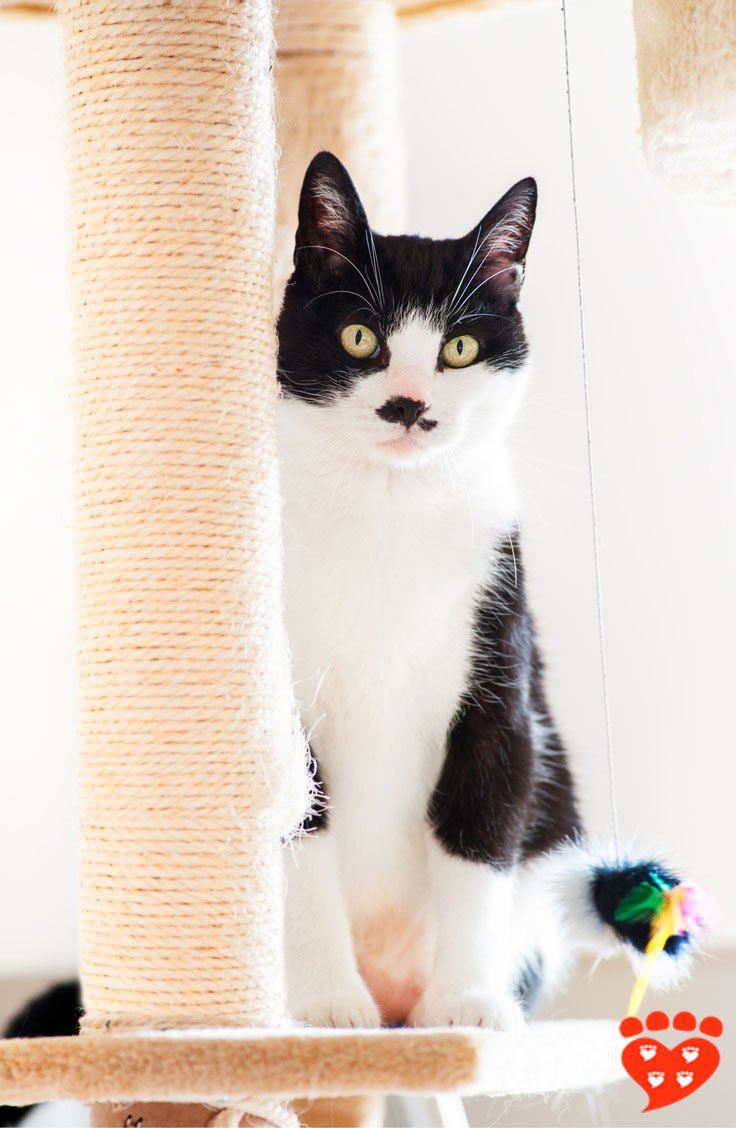 What Kind Of Scratching Post Do Cats Prefer?