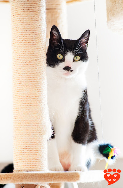 What's the best scratching post for cats? Sisal posts - like the one this black-and-white cat has - are one of several favourites. Read more.