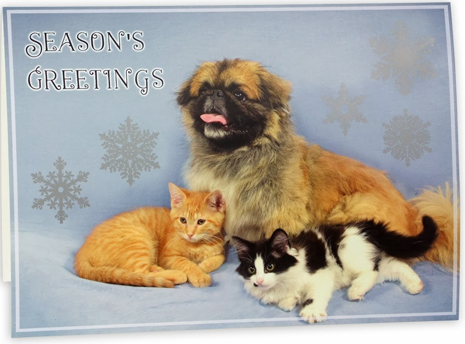 Cat Chat With Caren And Cody: Holiday Cards From Michigan Humane ...
