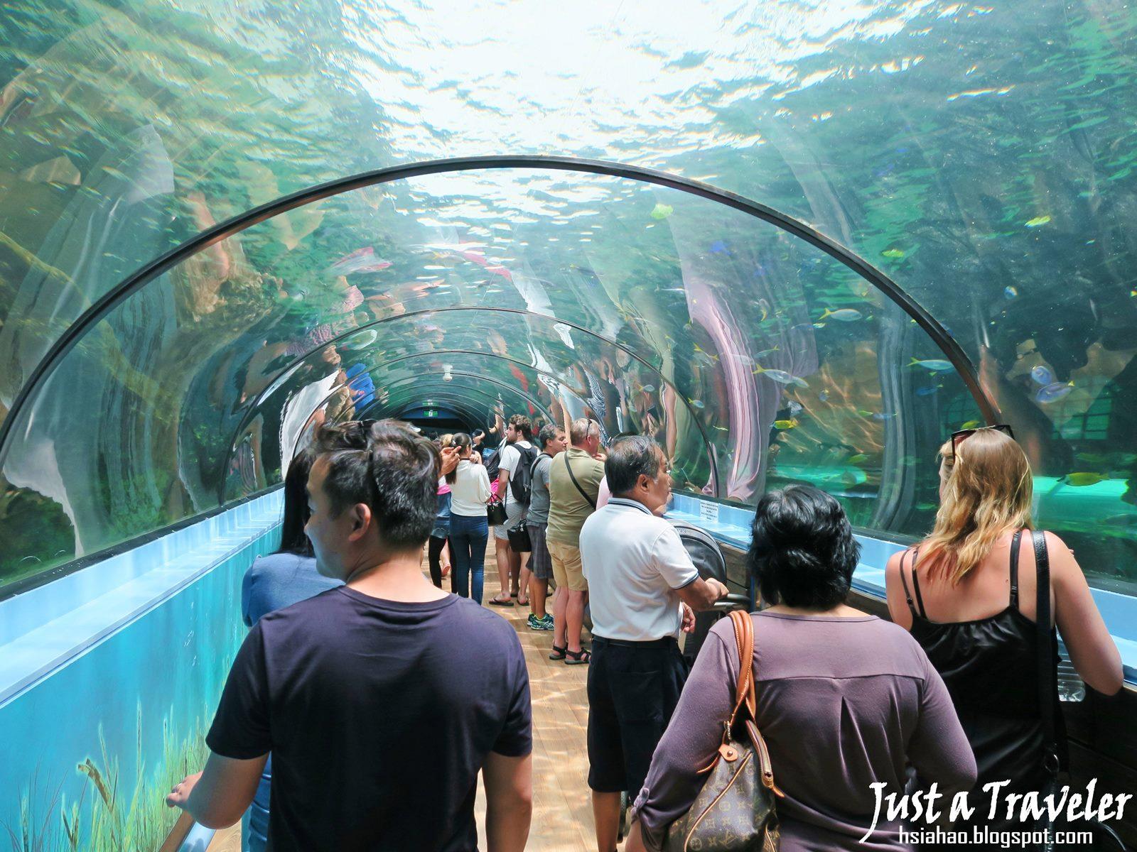 雪梨-景點-推薦-達令港-自由行-行程-旅遊-澳洲-雪梨海洋生物水族館-SEA LIFE Sydney Aquarium-Darling-Harbour-Tourist-Attraction-Travel