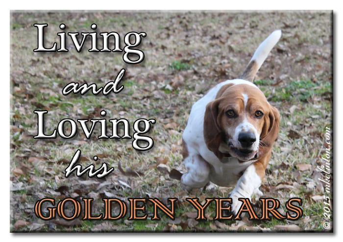 Basset Hound meme for his Golden Years