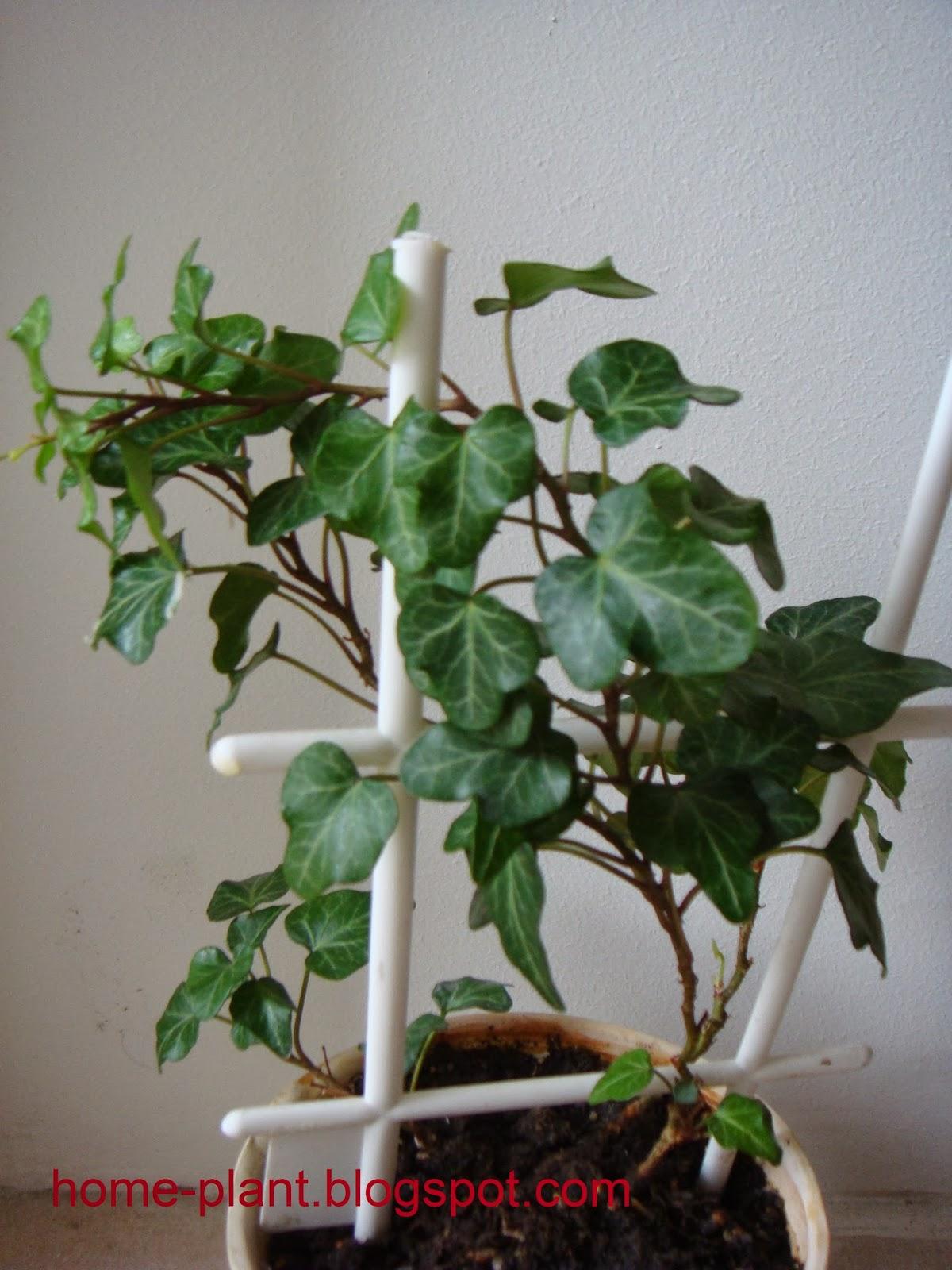 самых растение мужегон фото виде коллажа фотографиями