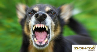 HOW TO AND WHAT TO DO WHEN A DOG ATTACKS YOU 2