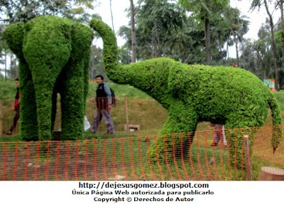 Foto de elefantes en Animárboles (Arte topiario) por Jesus Gómez