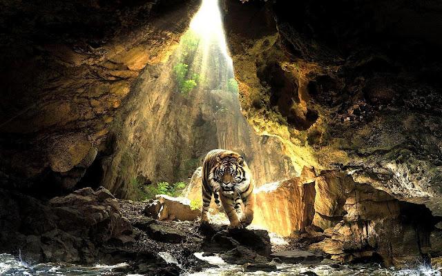 Een tijger in een grot