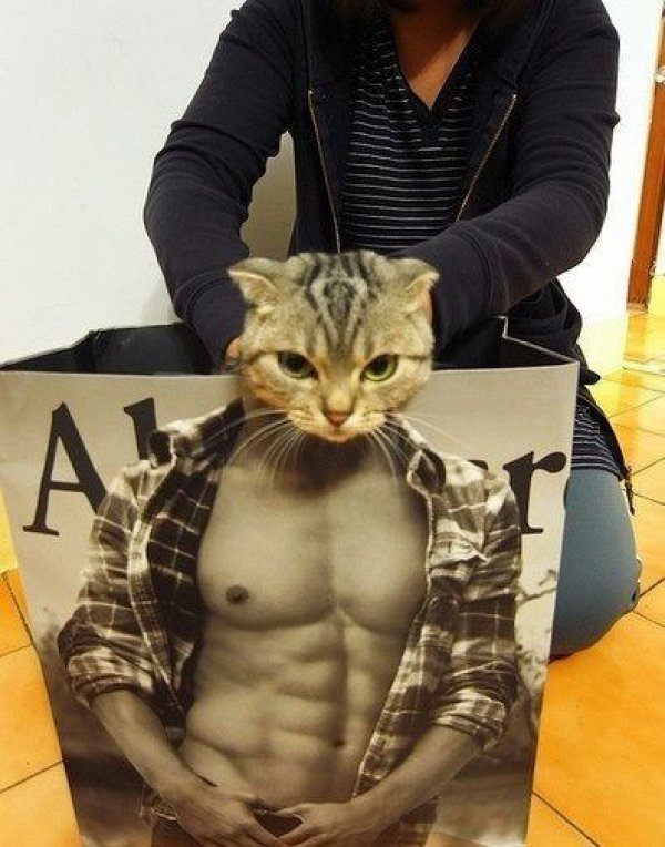 10 Cats In Abercrombie Bags