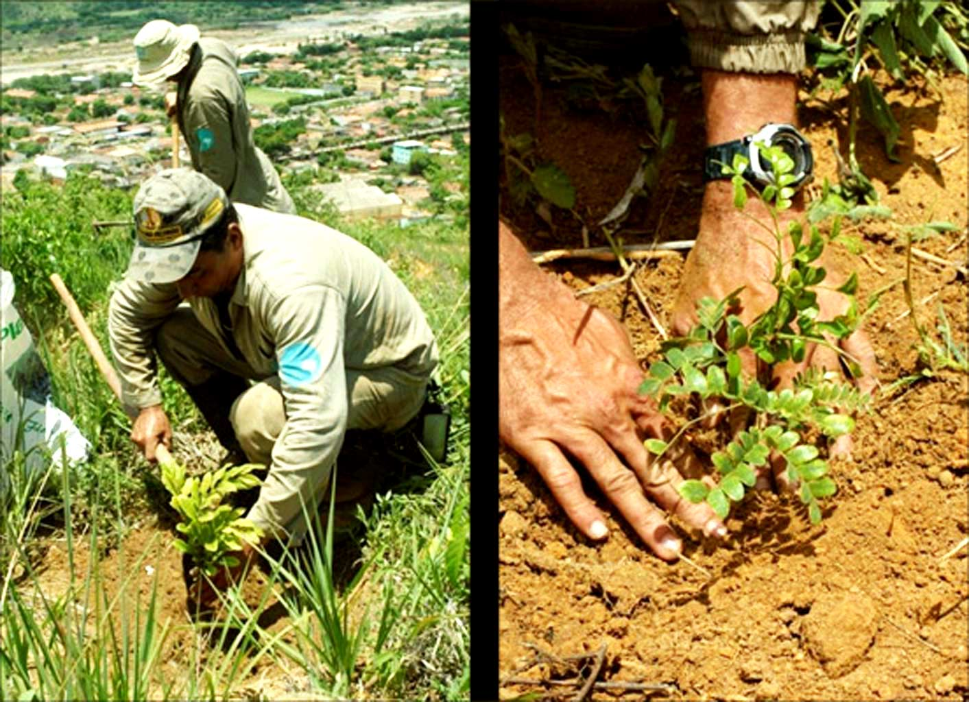 Incredible Pictures Of 20-Year Reforestation Project Of More Than 2.7 Million Trees