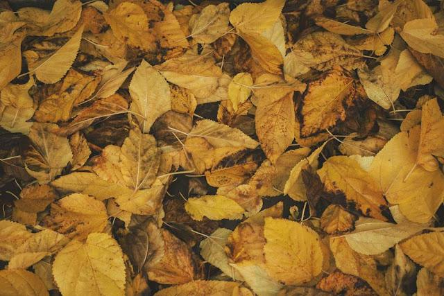 texture foglie
