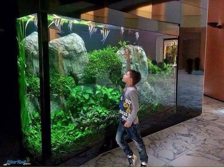 cậu bé đang chọc những chú cá trong bể thủy sinh