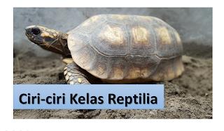 Ciri-ciri Kelas Reptilia