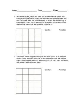 Dihybrid Cross Worksheet - Delibertad