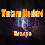 8bGames Western Bluebird Escape