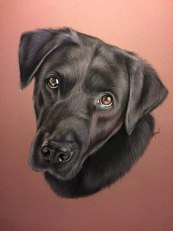 02-Black-Labrador-Virginie-Agniel-Pastel-Drawings-of-Cats-and-Dogs-www-designstack-co