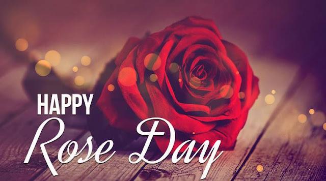 Rose Day Status Whatsapp DP