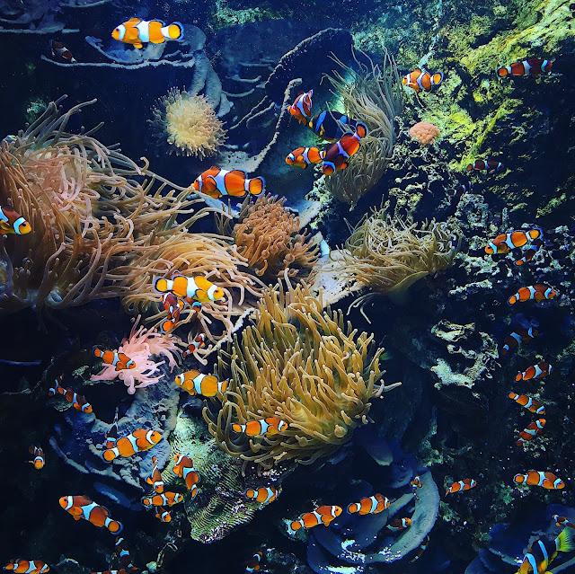 aquarium - croisic