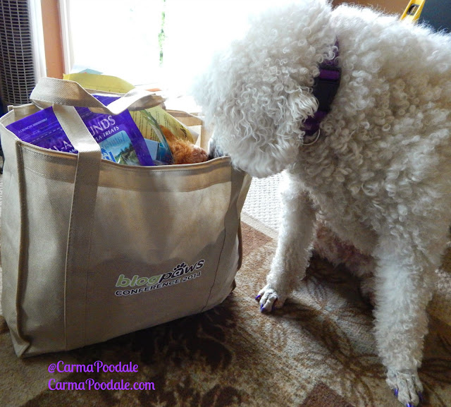 poodle smelling the Blogpaws bag