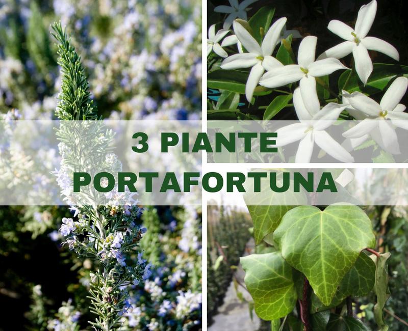 Verde time by stefano tenneroni verde time giardino 3 piante portafortuna per il 2018 - Piante portafortuna ...