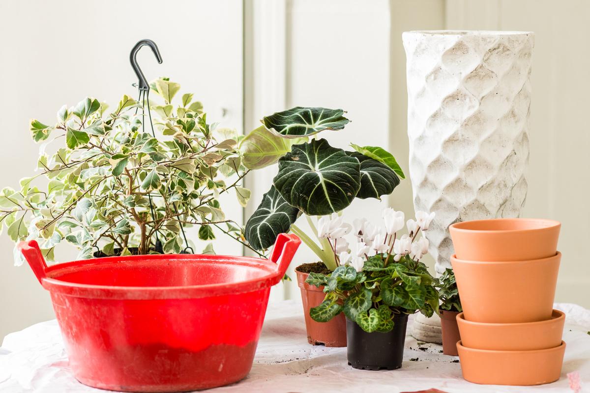 Hernepensaskujanne istuttamassa viherkasveja