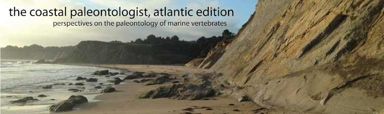 The Coastal Paleontologist, atlantic edition