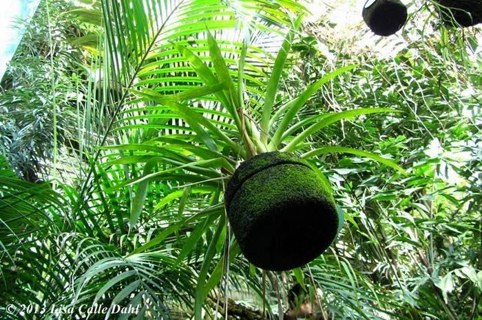 Descubriendo hojas invernadero tropical del real jard n for Jardin cactus madrid