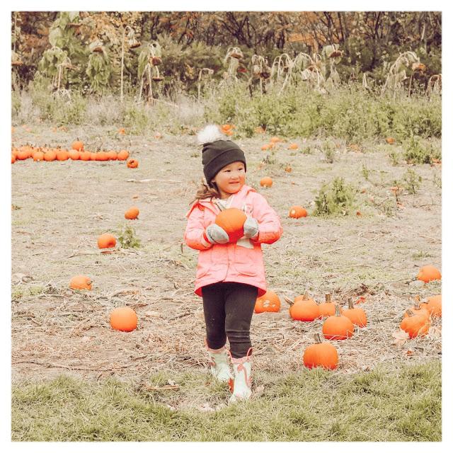 little girl in pumpkin patch picking pumpkin