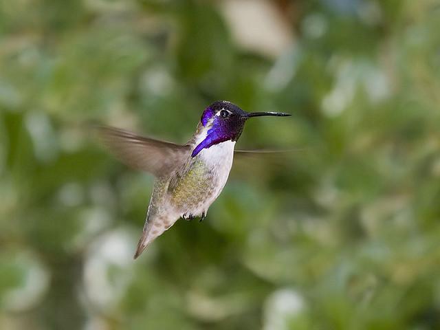 Hummingbirds In Flight The Ark In Space