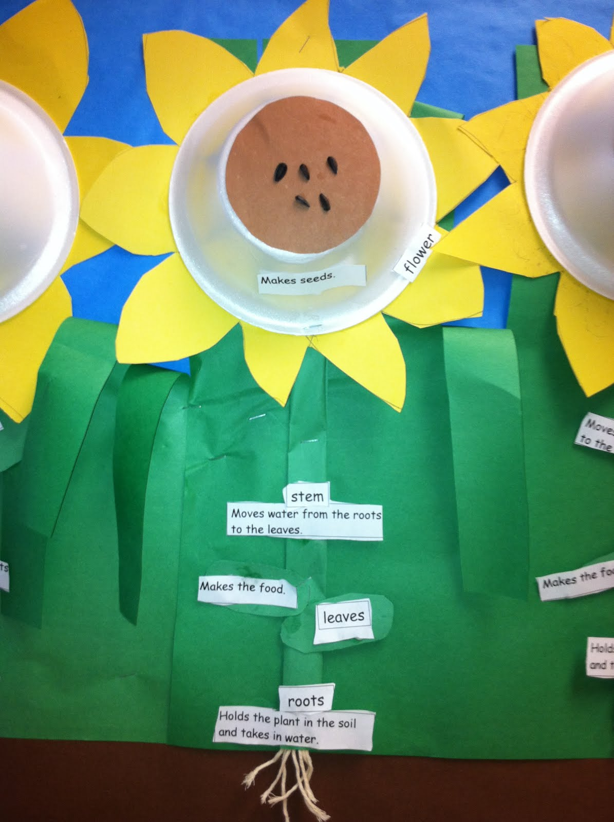 Parts Of A Sunflower Diagram Plant Stem Worksheet Crayon Bits First Grade Blog Sunny Sunflowers