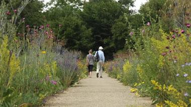 Merton Borders. Borduras de silvestres en el Botánico de Oxford