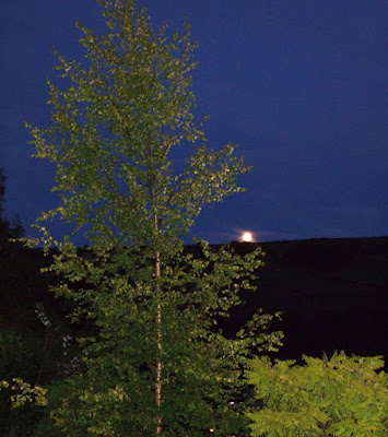 Garden glimpses of the moon peeping above Cartworth Moor