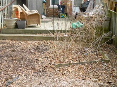 Spring Backyard Garden Cleanup Mount Pleasant East Davisville Before by Paul Jung Gardening Services a Toronto Gardening Company