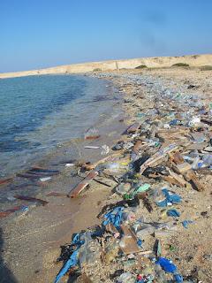 Plásticos acumulados en paya portuguesa