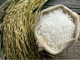 دراسة جدوى فكرة مشروع إستيراد الأرز البسمتى من الهند 2020
