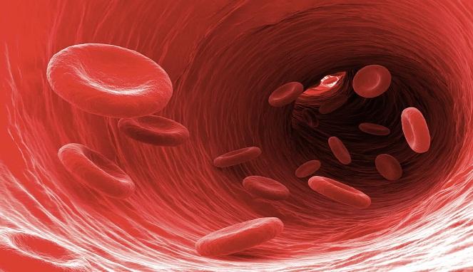 Ilustrasi peredaran darah dalam pembuluh darah