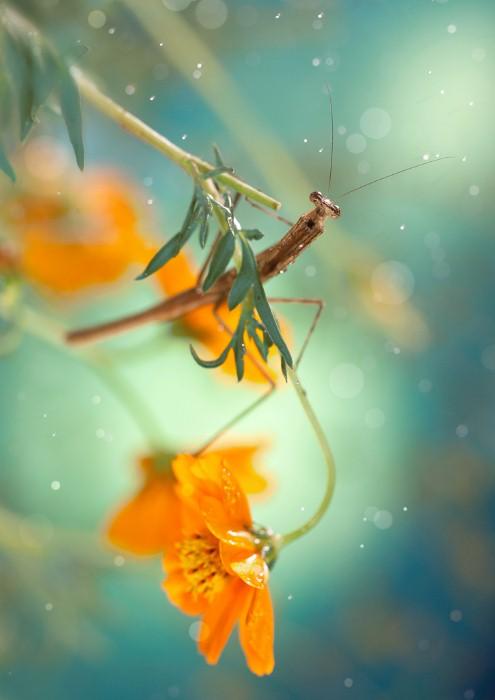 Необычные фотографии насекомых 20