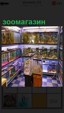 В зоомагазине на полках стоят клетки и аквариумы с рыбами