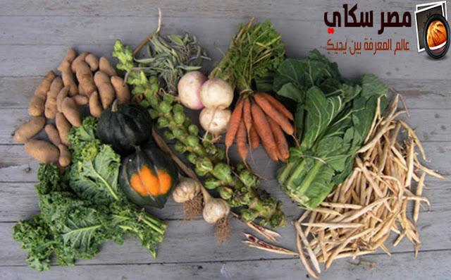طرق تجفيف وحفظ 10 أنواع من الخضروات Drying vegetables