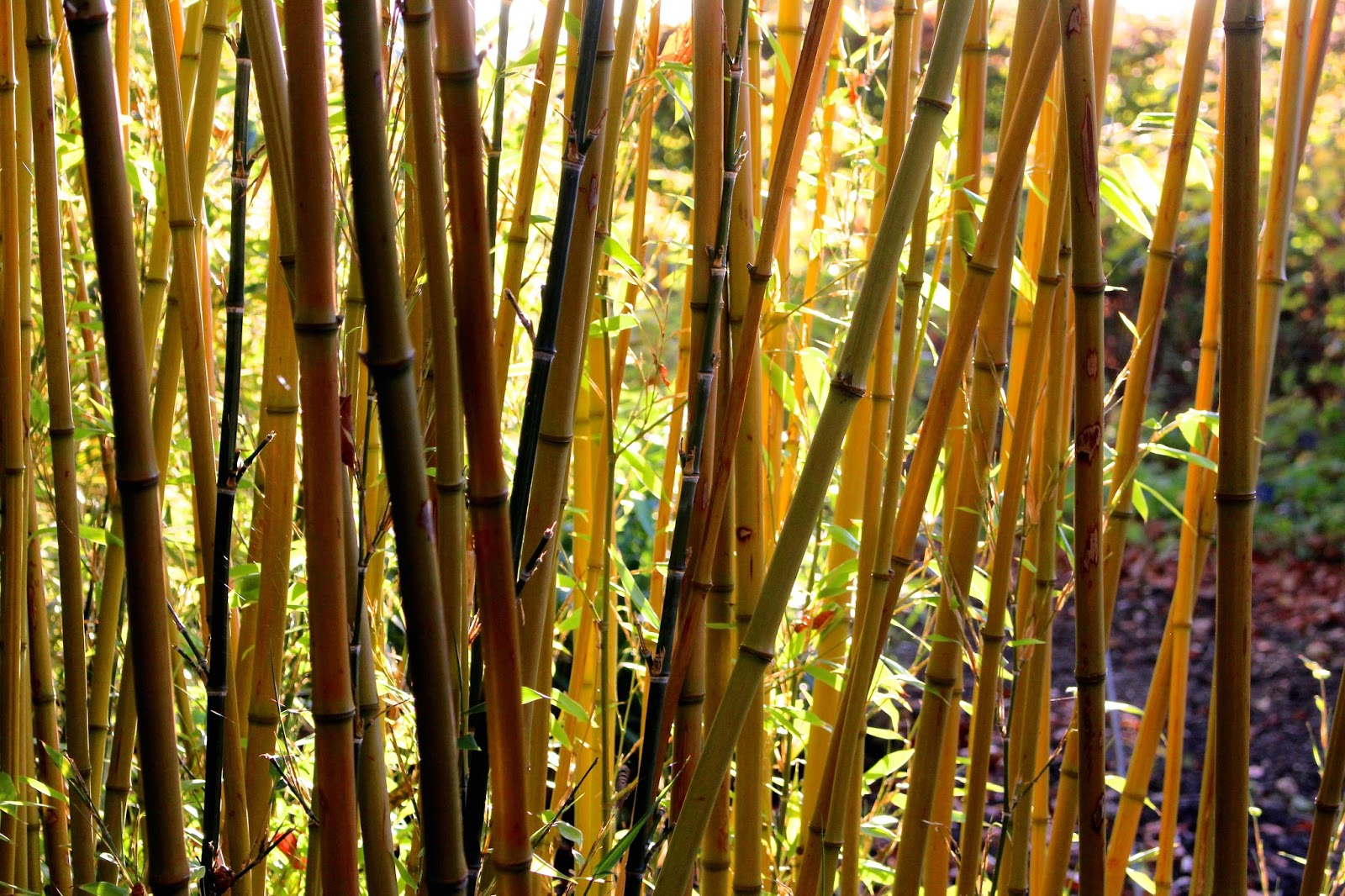 Blog Plant Photography Bamboo