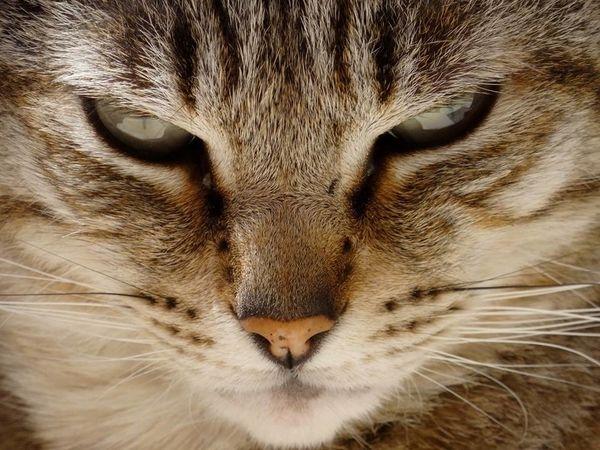 cat extreme close-up